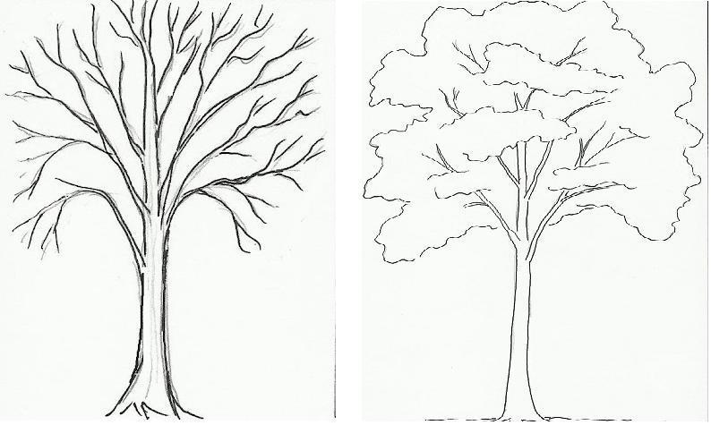 ствол дерева по контурам