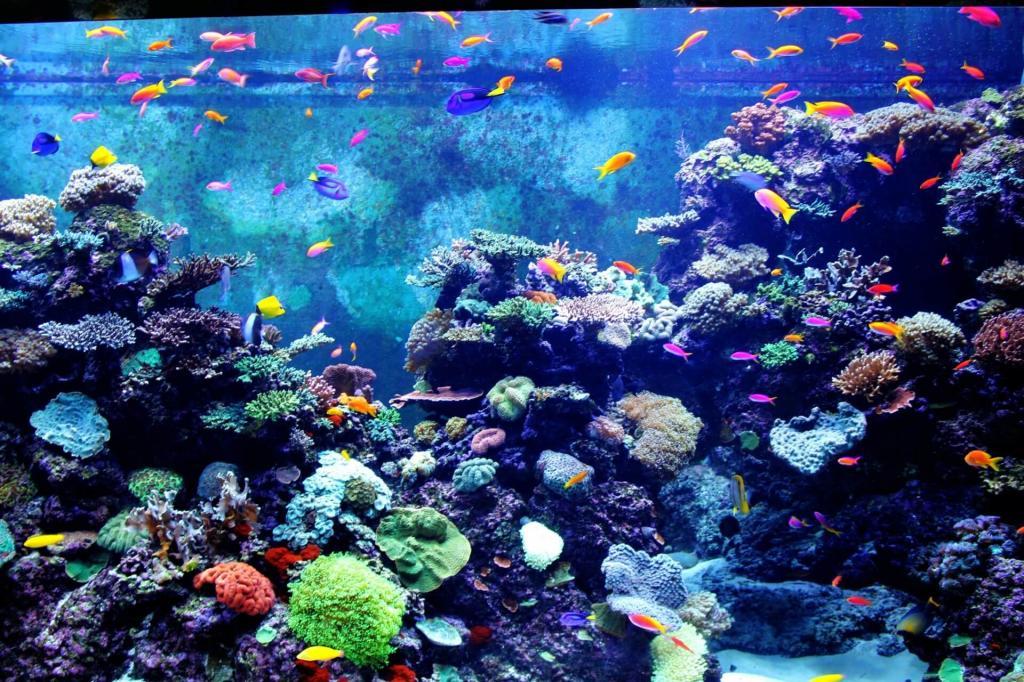 Украшения поделки для аквариума своими руками